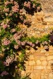 Pionowo pic pięcie roślina w drylującej ścianie Zdjęcie Royalty Free