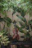 Pionowo Skrzypcowy klasyczny instrument z Naturalnym t?em zdjęcia stock