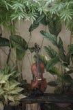 Pionowo Skrzypcowy klasyczny instrument z Naturalnym t?em obraz royalty free
