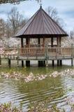 Pionowo Virginia Meadowlark ogródów wiosny Gazebo Zdjęcia Stock