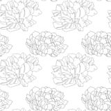 Pionsblumen-Beschaffenheitsillustration lizenzfreie abbildung