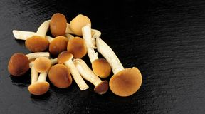 Pioppini Mushrooms Royalty Free Stock Images