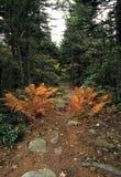 Piote sceniche del carrello di autunno @ Fotografie Stock Libere da Diritti
