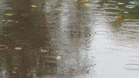 Piova i cerchi e le foglie di giallo in pozza sulla strada video d archivio