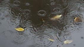 Piova i cerchi e le foglie in pozza sulla via in pioggia di autunno video d archivio