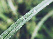 Piova la goccia Fotografia Stock