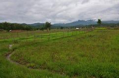 Piova la tempesta sul giacimento del riso a Pai a Mae Hong Son Thailand Fotografie Stock