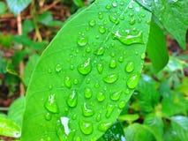 Piova le gocce Immagini Stock