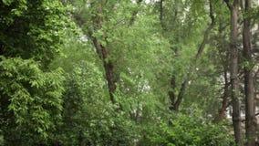 Piovendo nella giungla stock footage
