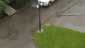 Piovoso e Windy Day nel parco di estate archivi video