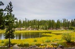 Piovoso sullo stagno - incubazione nazionale del pesce - Leadville, CO Fotografie Stock Libere da Diritti