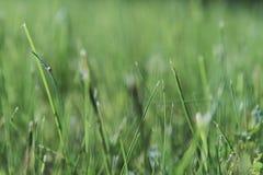 Piovuto appena sopra Fondo della primavera con il fiore di ciliegia, fioritura di sakura nei precedenti del cielo blu Fotografie Stock Libere da Diritti