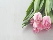 Piovuto appena sopra Fondo di legno bianco con cinque tulipani delicati Fotografia Stock