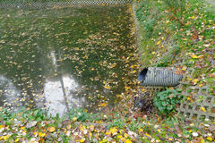 Pipe in contaminated pond Royalty Free Stock Photography