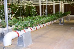 Pipe growing vegetables modern agriculture Royalty Free Stock Photos
