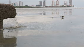 Pipe of sewer water from sewerage near sea in city. Pipe of sewer water from sewerage system directly near sea in city with skyscrapers stock video footage