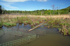 Pipe and wire fence next to culvert to prevent beaver dam Stock Photography