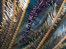 Pipefish d'ordinateur de secours Photos libres de droits
