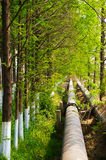 Pipeline in the woods. An oil pipeline laying in the green wood Royalty Free Stock Images