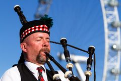Piper Royalty Free Stock Photography