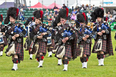 Pipers Royalty Free Stock Photos