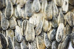 Salted sunflower. Seeds in clay pot on white background Stock Image