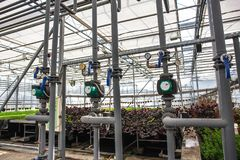 Pipes of automatic irrigation or watering system in modern hydroponic greenhouse, industrial cultivating and growing plants royalty free stock photo