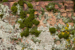 Pipestone & Moss Royalty Free Stock Photo