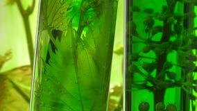 Pipet het deponeren dalingen van groene kleurstof in reageerbuizen stock video