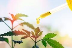 Pipet met Cannabisolie tegen Marihuanainstallatie stock afbeelding