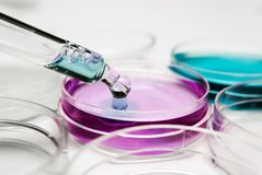 Pipet met daling van kleurenvloeistof en petrischalen royalty-vrije stock foto's