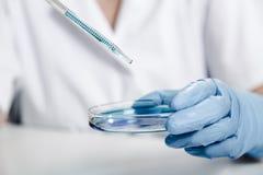 Pipet met daling van kleurenvloeistof en petrischalen Wetenschapper die oplossing in schotel onderzoeken bij een laboratorium royalty-vrije stock afbeelding