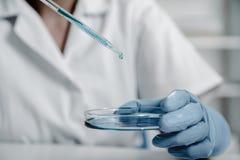 Pipet met daling van kleurenvloeistof en petrischalen Wetenschapper die oplossing in schotel onderzoeken bij een laboratorium royalty-vrije stock foto's