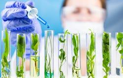Pipeta del control del científico con descenso líquido azul del agua en tubos de ensayo con la planta fresca verde Foto de archivo libre de regalías