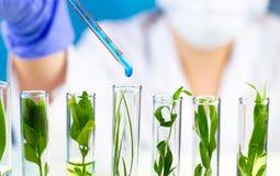 Pipeta del control del científico con descenso líquido azul del agua en tubos de ensayo con la planta fresca verde Imagen de archivo libre de regalías