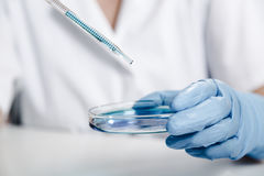 Pipeta z kroplą koloru ciecz i Petri naczynia Naukowiec egzamininuje rozwiązanie w naczyniu przy laboratorium Obraz Royalty Free