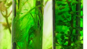 Pipette depositing drops of green dye in test tubes stock footage