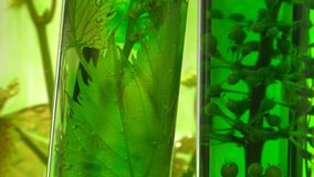 Pipette depositing drops of green dye in test tubes stock video