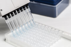 Pipette depositing samples into a 96 well micro-plate Stock Image