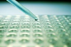 Pipette dropper filling PCR plate stock photos