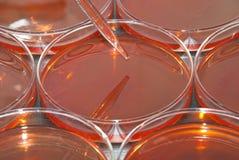 Pipette- och Petri maträtt Arkivbild