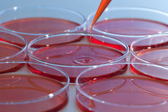 Pipette and Petri dish Stock Images