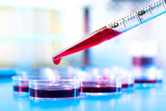 Pipette and petri dish Royalty Free Stock Photography