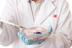 Pipette and petri dish Royalty Free Stock Photos