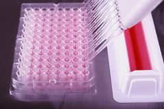 Pipetting with a 12-channel pipette in laboratory Stock Photography