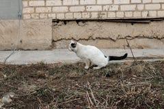 Pipi bianche senza tetto del gatto sulla terra fotografia stock libera da diritti