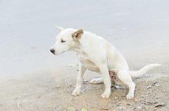 Pipi del cane immagine stock