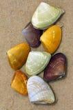 Pipi Shell Stockbild