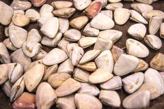 Pipis Royalty Free Stock Photography