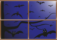 Pipistrelli alla vostra finestra Fotografie Stock